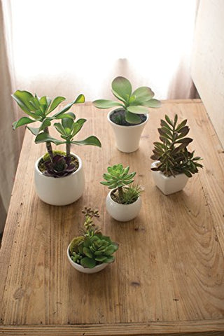 Set Of 5 Artificial Succulents W White Ceramic Pots - Les Spectacles French Industrial