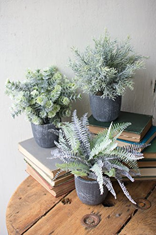 Set Of Three Fern Succulents With Round Grey Pots