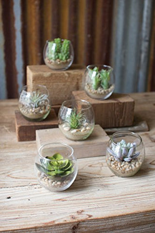 Set Of Six Succulents With Glass Containers - Les Spectacles French Industrial
