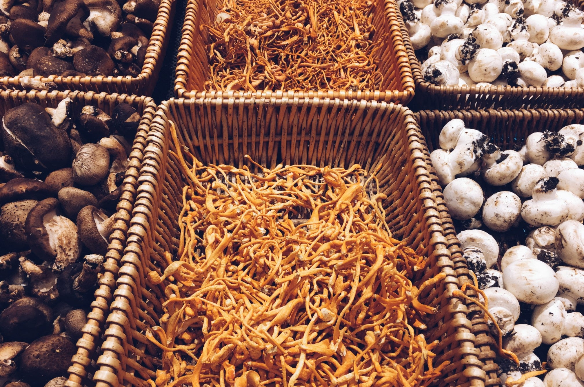 Cordycepts in a basket for sale, surrounded by other types of mushrooms in baskets
