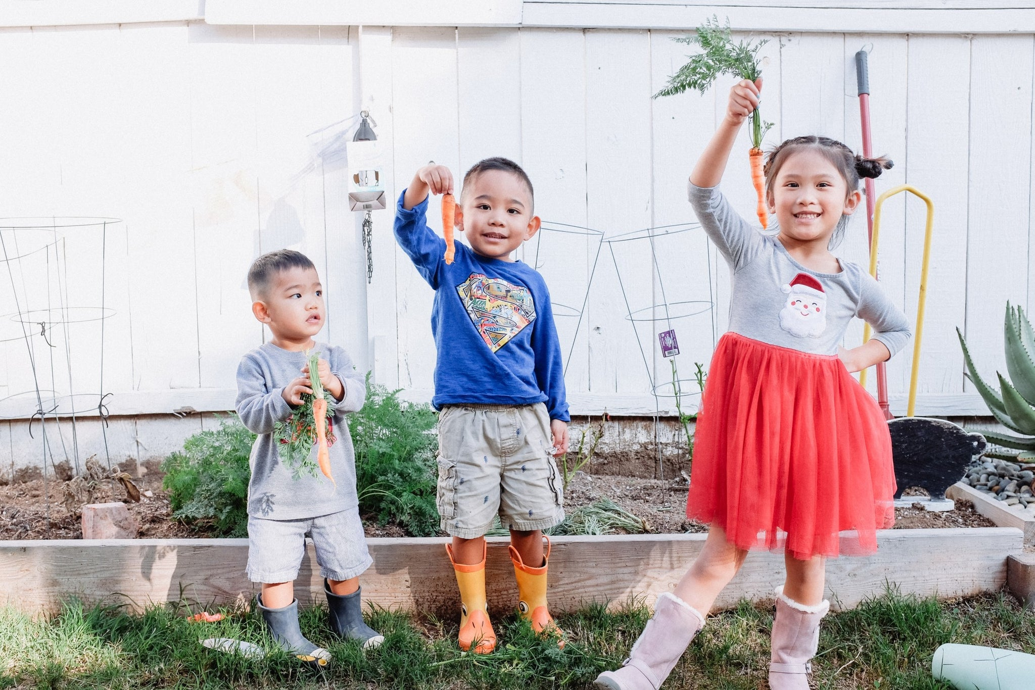 Three kids standing in front of a vegetable patch, each holding a carrot and smiling.