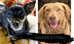 Freddie & Posey, Shinto's Doggies, Ages 13 and 2