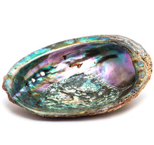 "Smudge Ash Tray Burner - Abalone shell - Large 5""-6"""