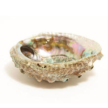"Smudge Ash Tray and Burner - Abalone shell - Large 5""-6.5"""