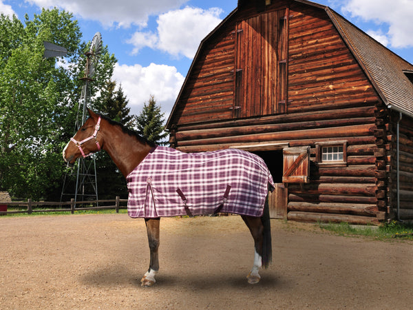 Pony Size Cotton Day Sheet