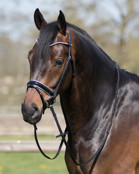Parla Bridle by QHP Pony and Cob Sizes