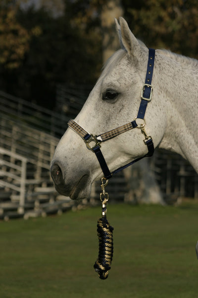 Kensington Pony Size Halter Set