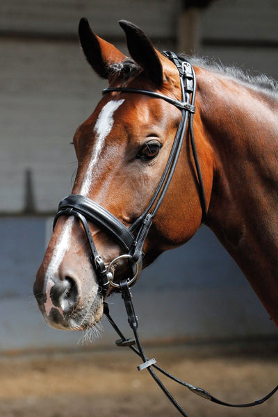 Cob size round sewn crank noseband with flash bridle