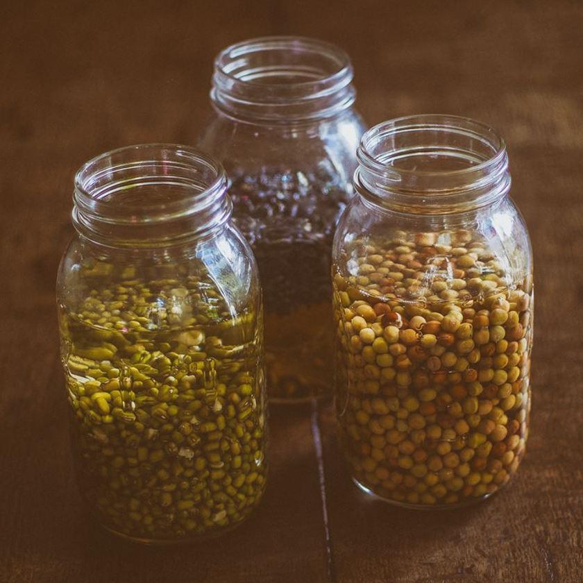 Sprouting jars filled with pulses, mung beans and water