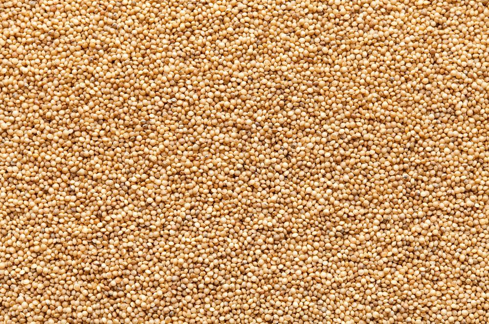 Amaranth Grain Sprouting Seeds - Wholesome Supplies