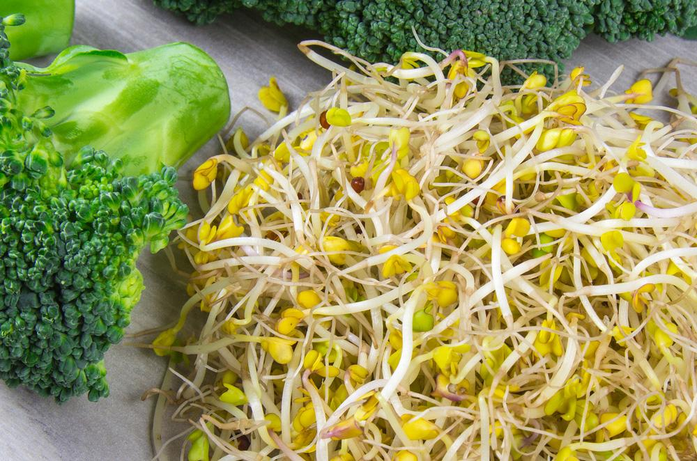 Broccoli Sprouting Seeds - Wholesome Supplies