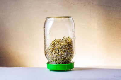 Glass Sprouting Jar One Litre - Wholesome Supplies