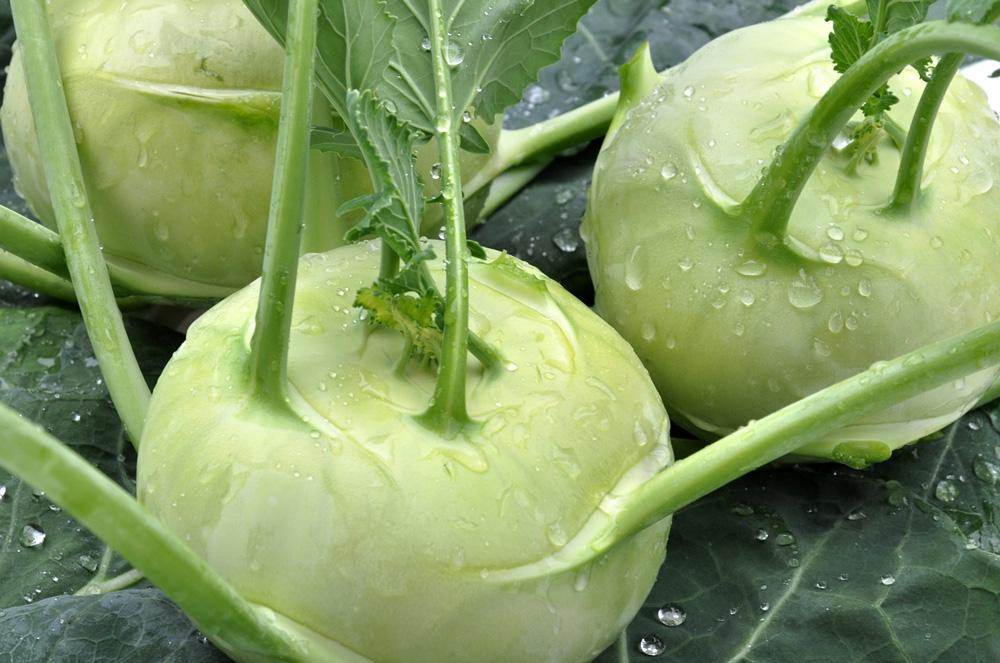 Kohlrabi White Vienna Vegetable Seeds - Wholesome Supplies