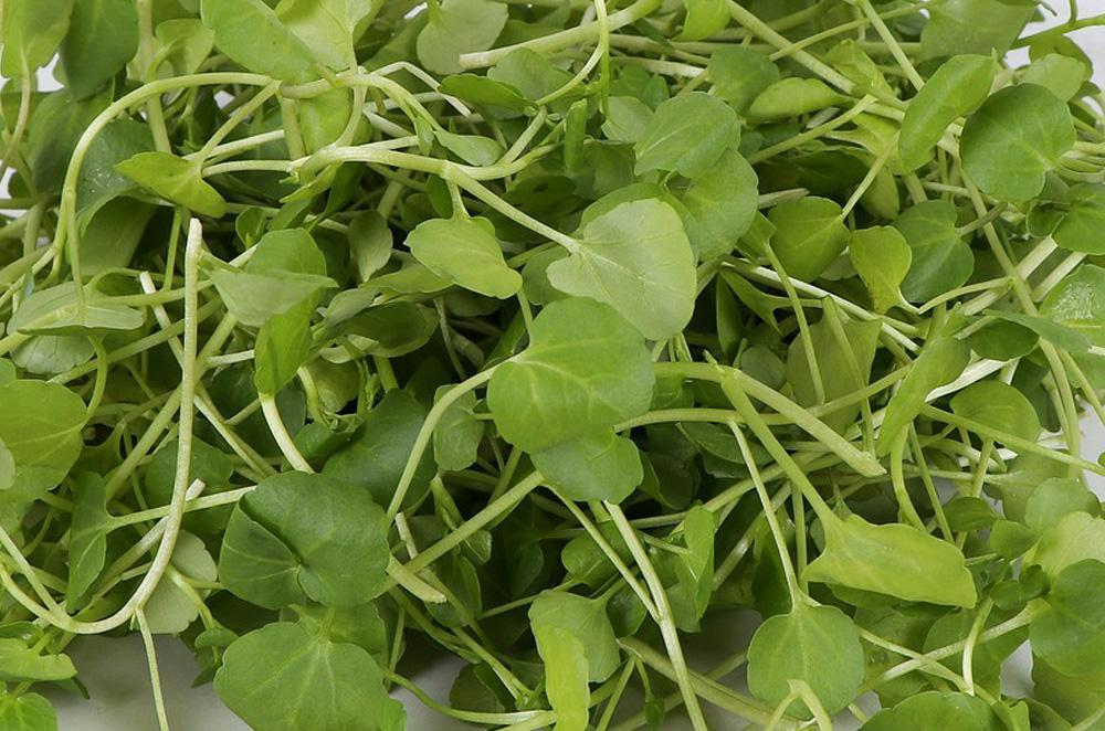 Watercress Herb Seeds - Wholesome Supplies