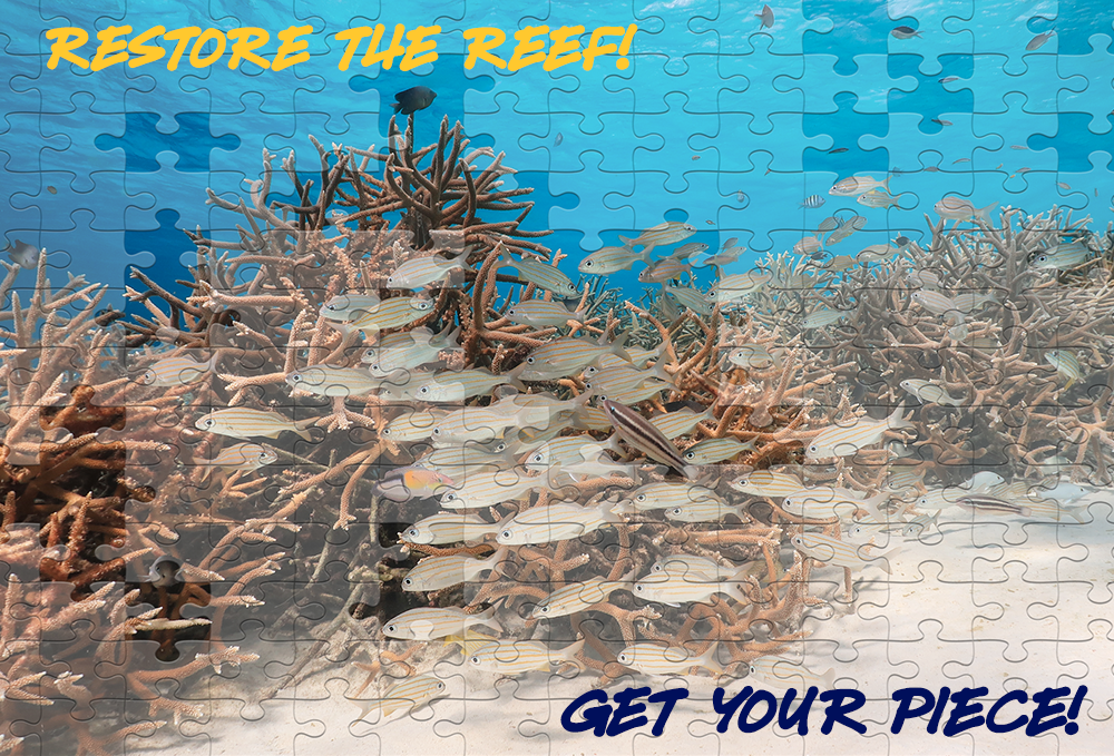 Restore The Reef!