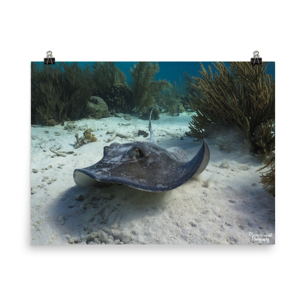 "Scuba Poster - ""The Stingray"""