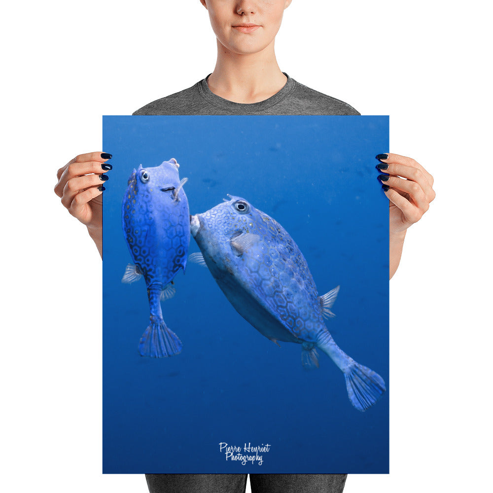 Cowfish Prints Scubalooks