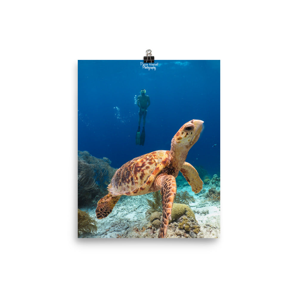 Scuba Poster Turtle Close Up