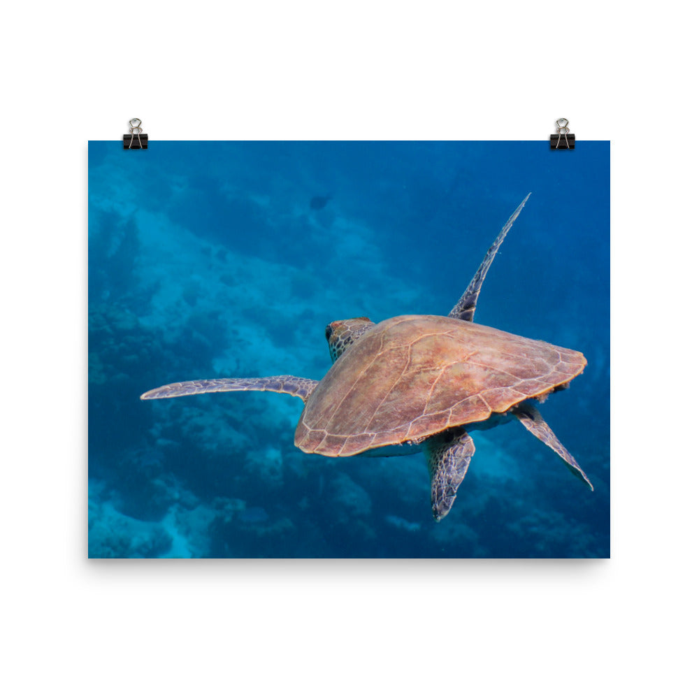 Scuba Poster Flying Turtle