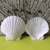 Custom Hand Decorated Seashell