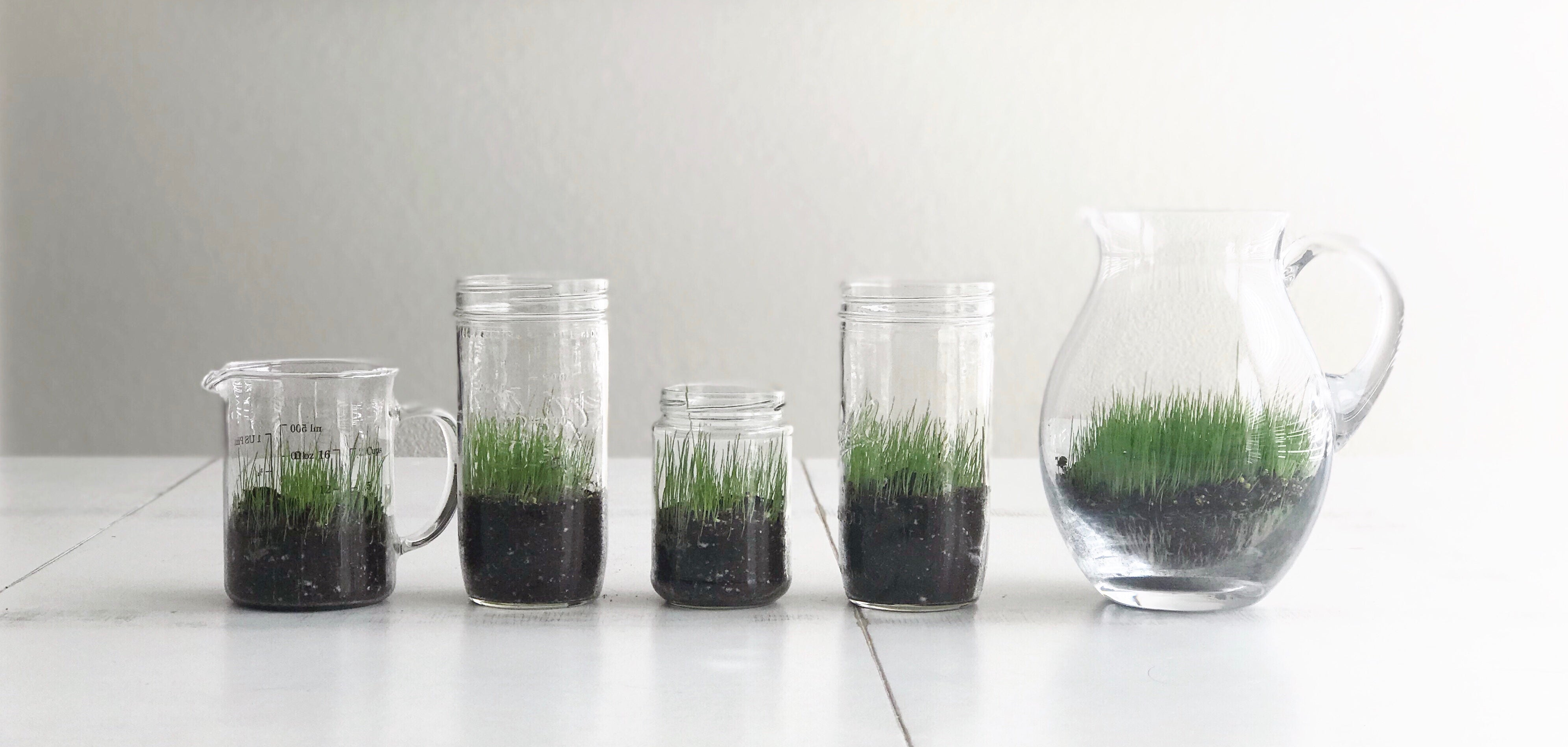HOW TO PLANT INDOOR GRASS THIS SPRING