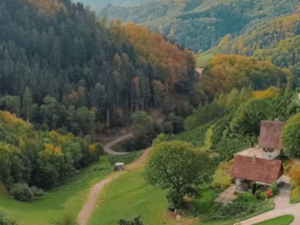 11 Best Things To Do In The Black Forest, Germany | Rickshaw Journey