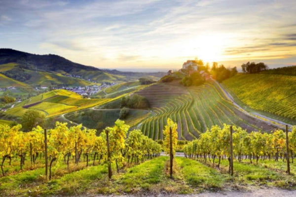 German wine: 5 travel itineraries for sampling the country's best | Rickshaw Journey