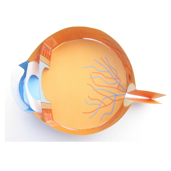 Our Easy Eye model is perfect for younger students!