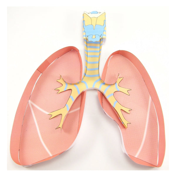 Make a pair of lungs today!
