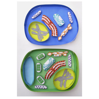 Compare & contrast animal and plant cells with our new models!