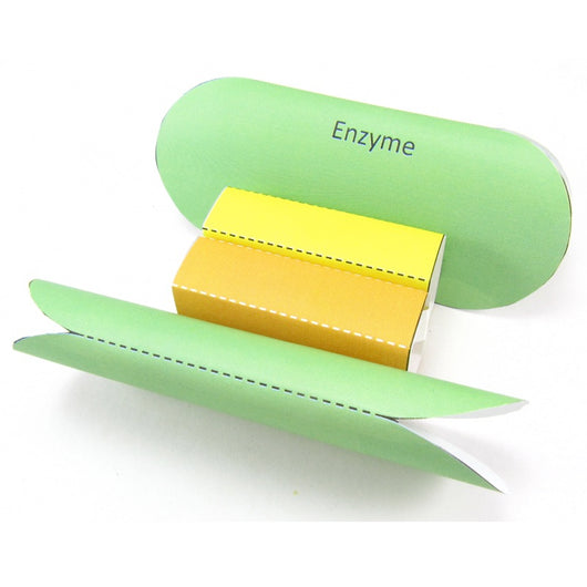 enzymes origami organelle