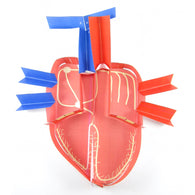 electrical control of the heart origami organelle