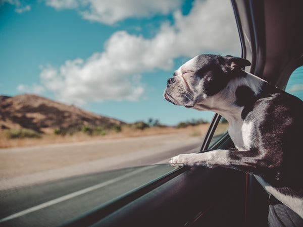 Tips travelling with your pets by car