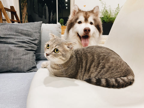 alfiepet_Can dog and cat get along