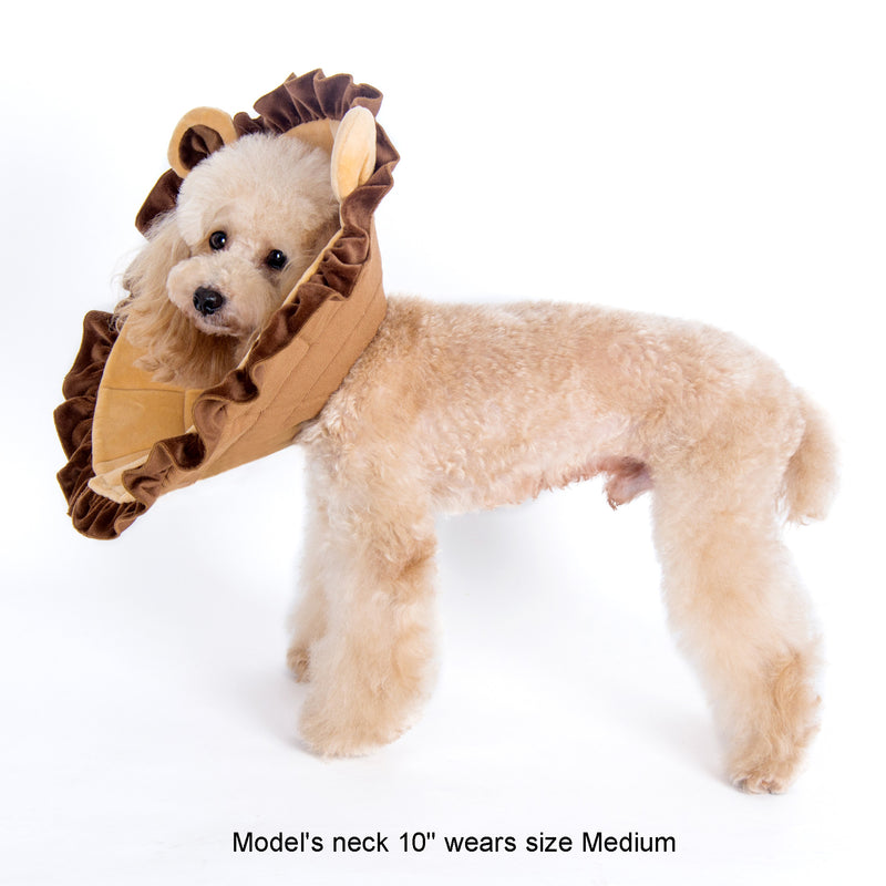 Noah Lion Recovery Collar