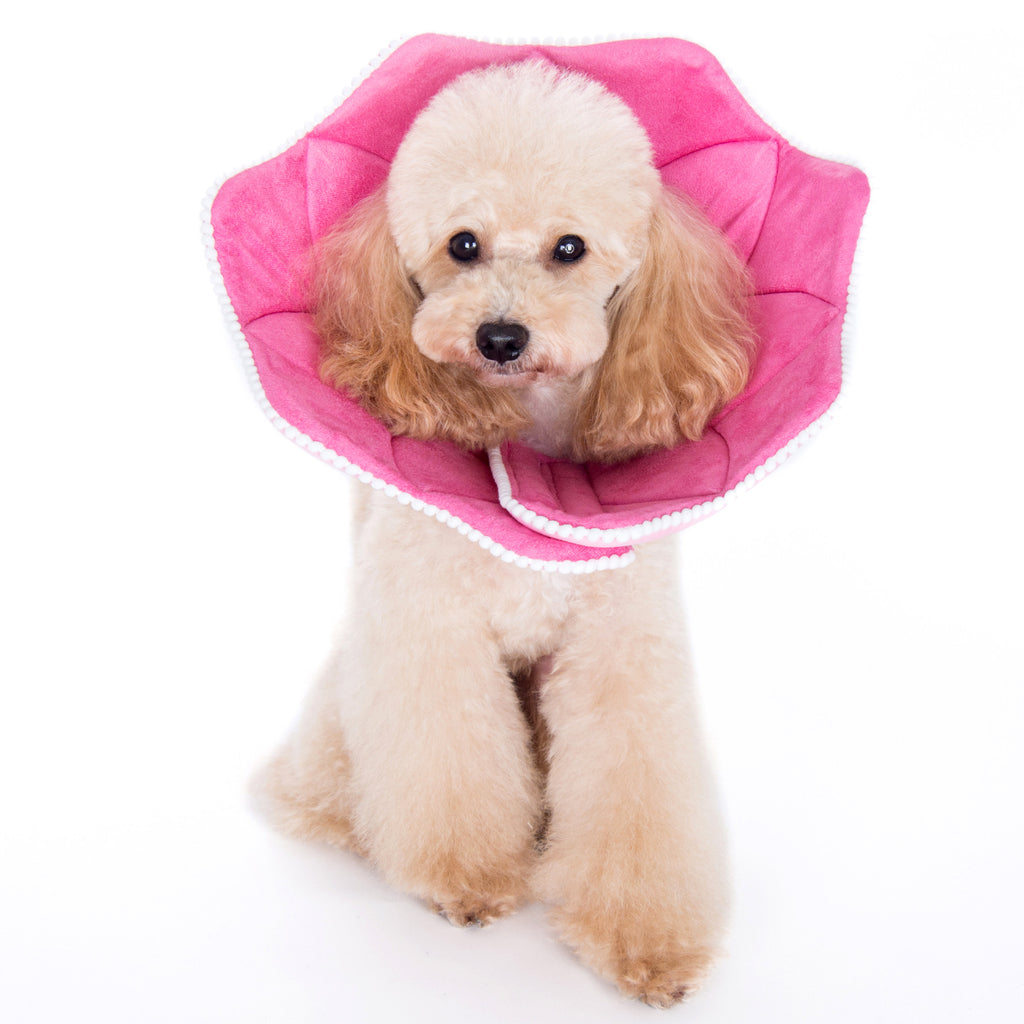 Noah Pink PomPom Recovery Collar