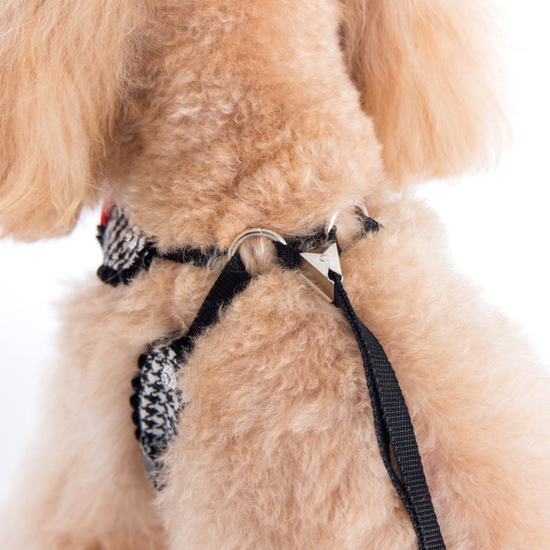 Shayne Step-in Harness and Leash Set