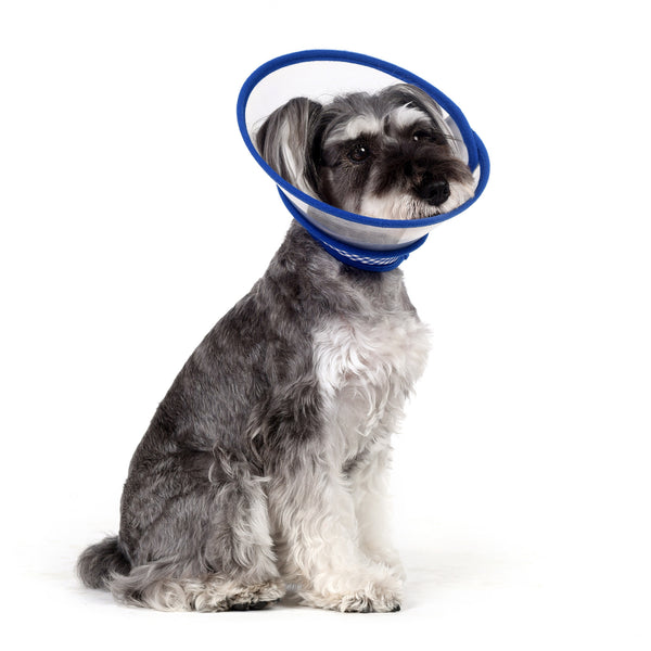 Zumi Recovery Collar with Soft Edge V2 Blue - Velcro Closure
