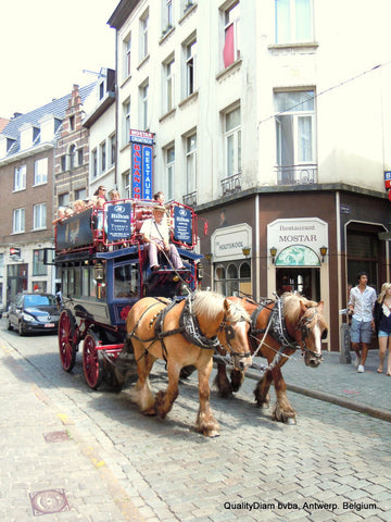 Horse ride in Antwerp
