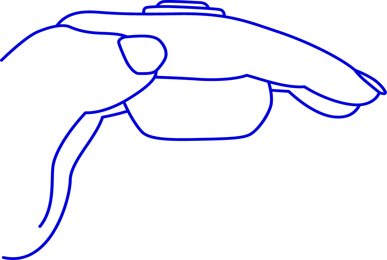 Image of hand cupped with fingers extended holding Fin between and underneath two fingers