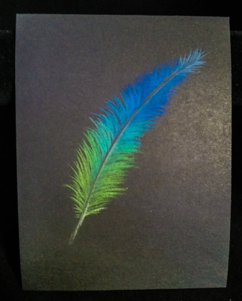 Feather Sketch - Pastel on Black - Creations by Tammy