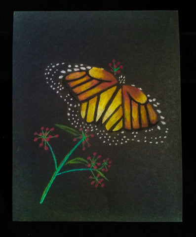 Butterly Sketch - Pastel on Black - Creations by Tammy