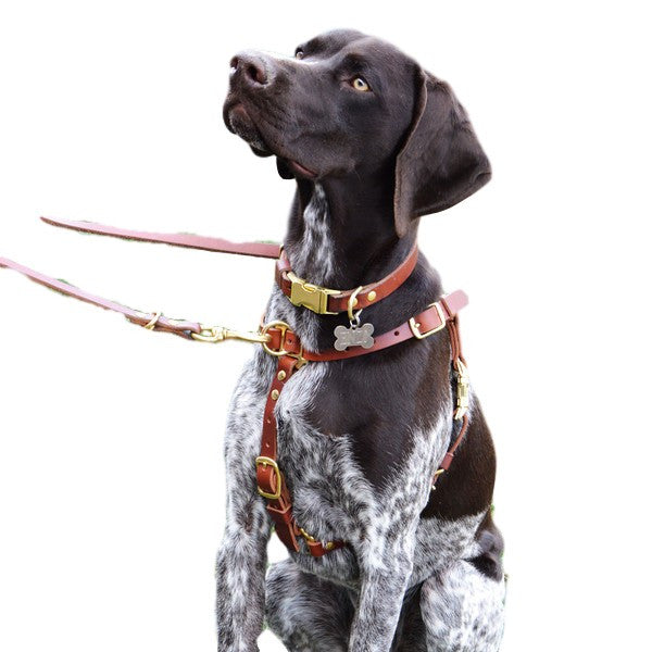 Training Leads & Harnesses