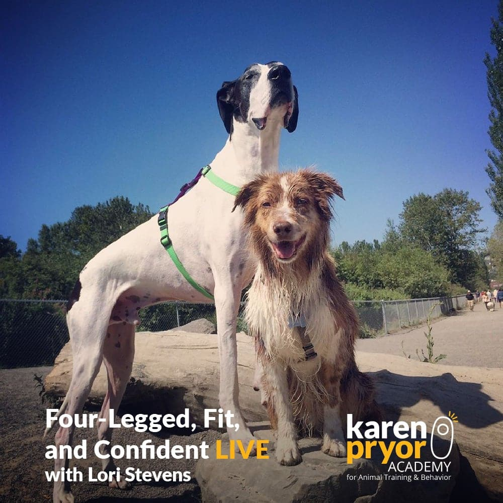 Four-Legged, Fit, and Fabulous LIVE! with Lori Stevens