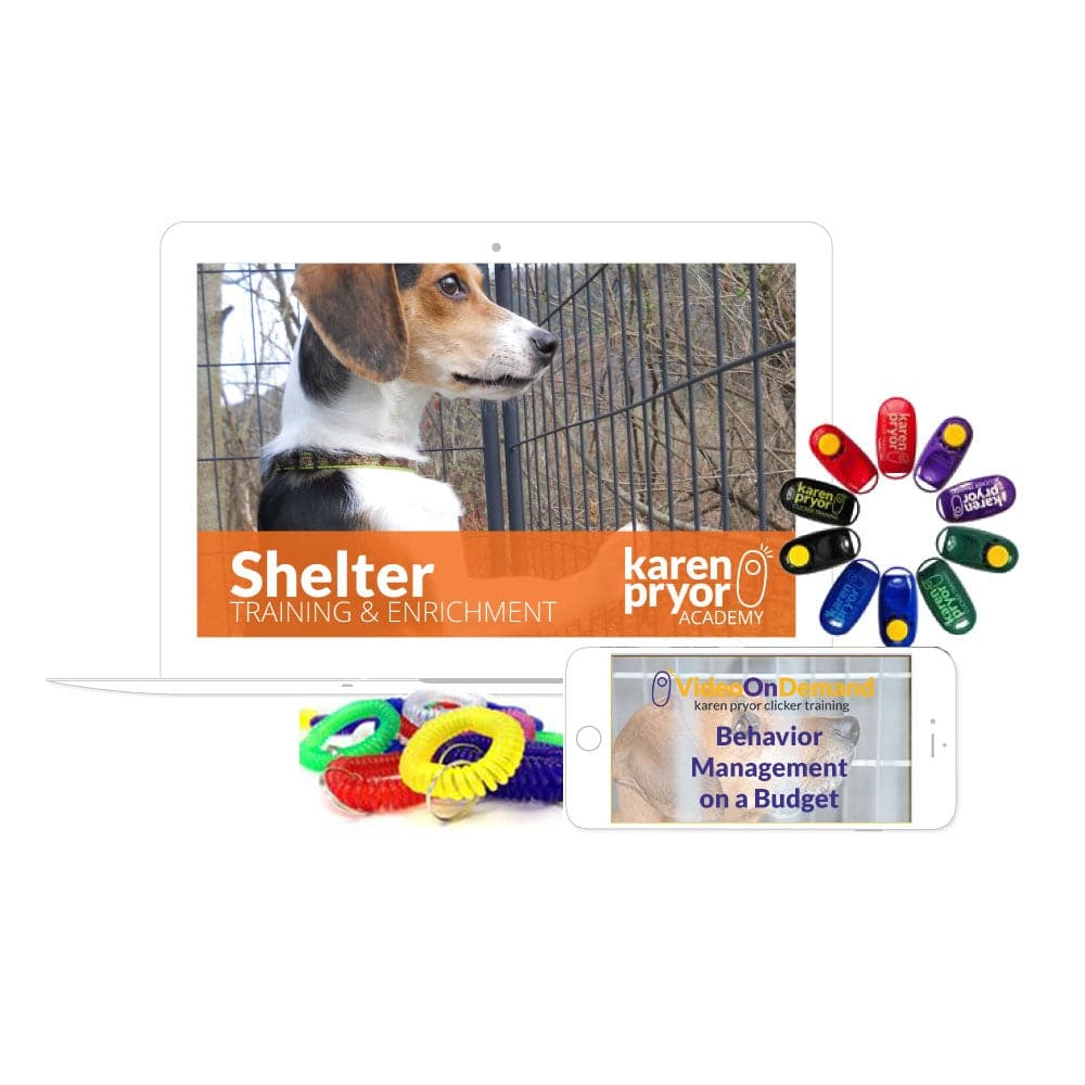 Shelter Training & Enrichment: Platinum Bundle
