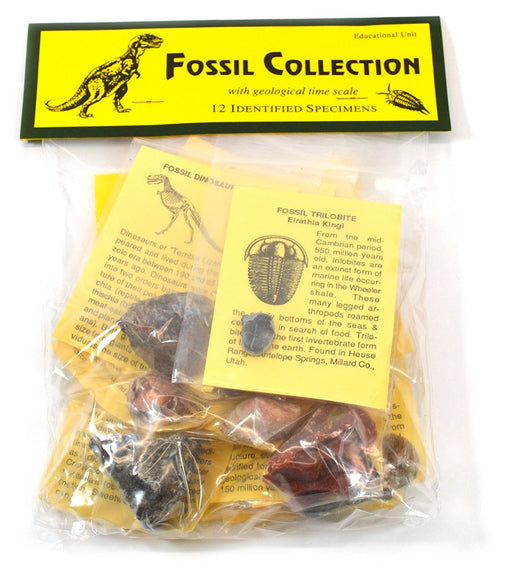 Deluxe Authentic Fossil Collection with 12 Identified Specimens, Information Cards, and Geological Timescale
