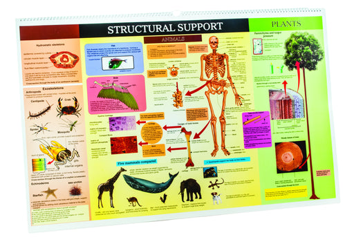 Flip Chart on 10 Subjects