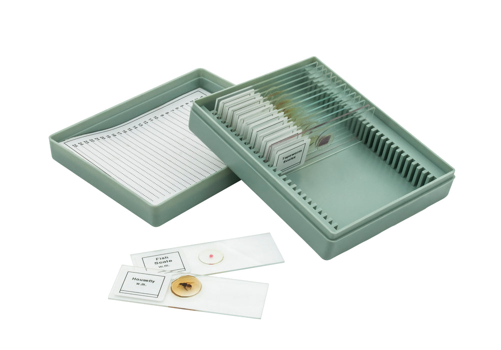 Microscope Slide Set Introductory Set No. VIII, Set of 15 Slides