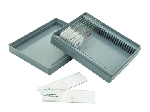 Microscope Slide Set Basic Morphology Slides Set No. XII