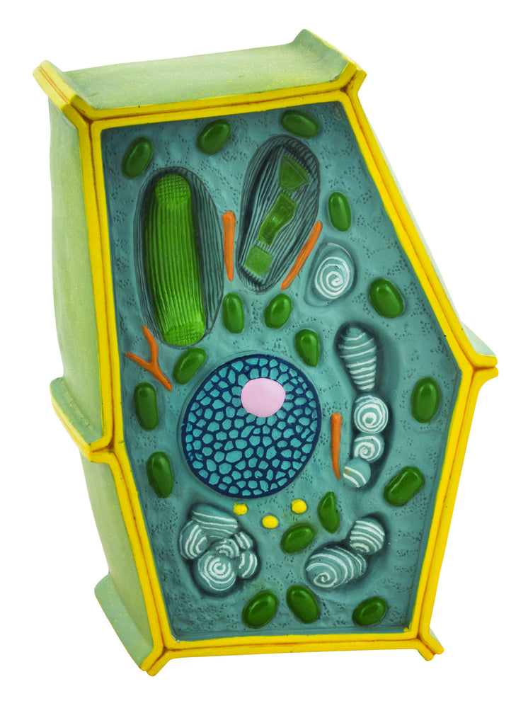 Model Plant Cell